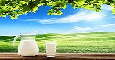 milk and sunny spring field